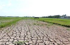 Mekong Delta region faces water shortages, saline intrusion
