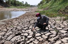 Vietnam seeks technical cooperation to fight climate change