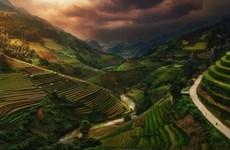 Picture of Vietnamese rice terraces enters prestigious photography contest
