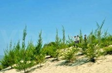 Trees planted, coastline saved, with Japanese aid
