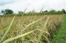 Northern farmers hope for bumper harvest