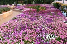 Da Lat flower festival to be held early next year
