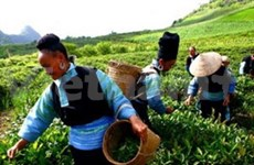 FAO selects Vietnam as among best hunger fighters