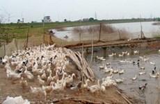 Bird flu claims fifth fatality