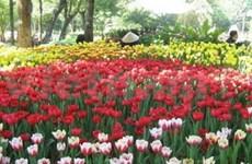 Largest-ever flower festival kicks off in HCM City