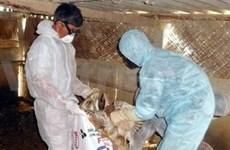 Hanoi hosts bird flu plenary meeting