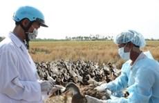 Vietnam pledges to wipe out bird flu