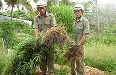Greater Mekong Sub-region serious on drug control