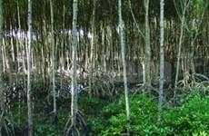 Kien Giang receives world biosphere reserve certificate