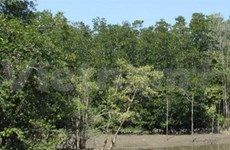 Can Gio mangrove forest's brand name promoted