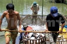 Vietnam, WWF team up to promote tra fish
