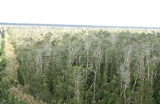 Decree strengthens forest protection