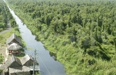 FAO helps Vietnam with forest management