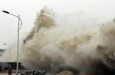 Powerful Japan quake won't affect Vietnam