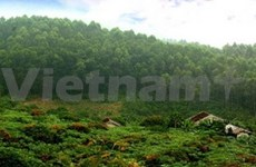 Vietnam responds to Int'l Year of Forests 2011