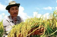 VN exports 1.85 million tonnes of rice in first quarter