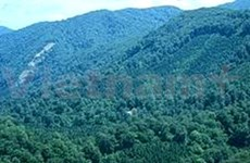 Deputy PM calls for better forest development