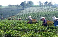 Agricultural sector aims to boost added value