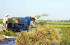 Large-scale rice farms become operational