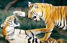 Workshop discusses tiger conservation