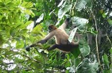 Growing threat to biodiversity