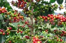 New training centre for VN coffee producers
