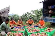 Strategy needed for VN farm exports to US