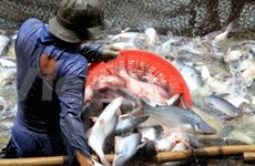Seafood exporters drop by almost half