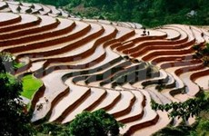 Terraced rice fields become National Relics