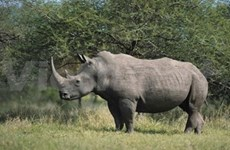 Campaign fights illegal rhino and bear trade