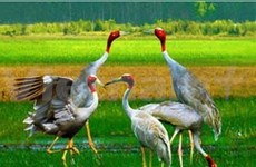Report on country's bio-diversity published