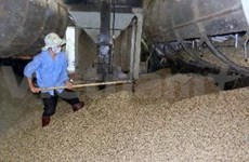 Vietnam coffee exports set new record