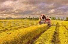 Rice output estimated at 43.7 mln tones in 2012
