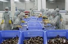 VN's shrimp producers not subsidised, says VASEP
