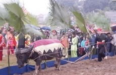 Long Tong festival kicks off in northern provinces