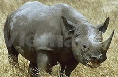Video campaign to end rhino horn trade