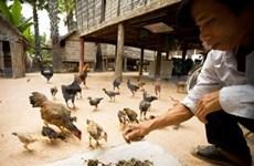 Cambodia's initial success against avian influenza