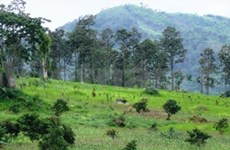 Central Highlands forests to be protected, increased