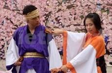 Cherry blossom festival to open in Ha Long
