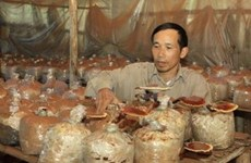 Mushroom growing brings mine victims out of poverty
