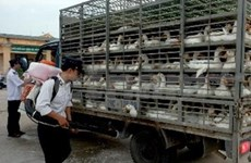 Stronger moves against H7N9, H5N1 bird flu ordered