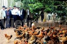 No H7N9 virus found in Vietnam