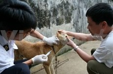 Vietnam moves to eradicate rabies by 2020