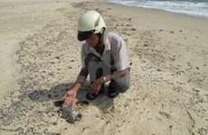 Oil spill worries Quy Nhon fishermen