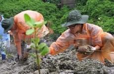 Students plant mangrove trees in Ha Long Bay