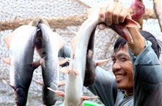 Cooperative economy promoted in Mekong Delta