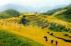 Cultural festival highlights Mu Cang Chai terraced fields