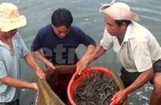 Shrimp exports up 38 percent