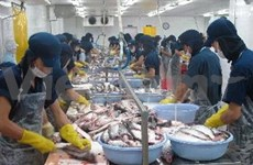 Tra fish exports forecast at 1.8 billion USD