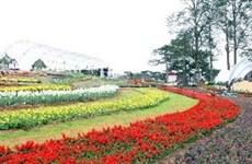 Planters in rush for Da Lat Flower Festival